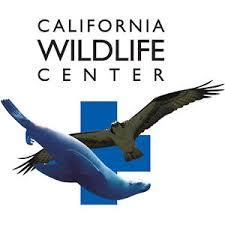 California Wildlife Center